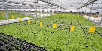 智能水肥一体化系统:用科学技术促进农业生产节水节肥